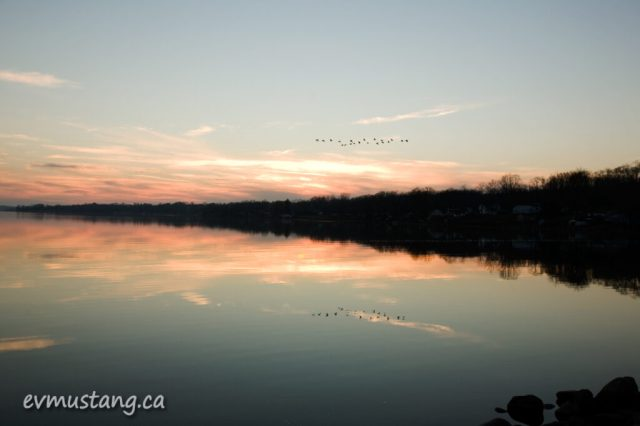 image of geese flying in fromt of a sunset over a lake