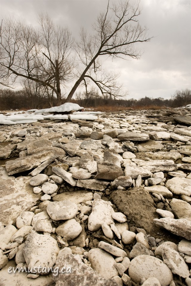 image of rocks, trees and ice