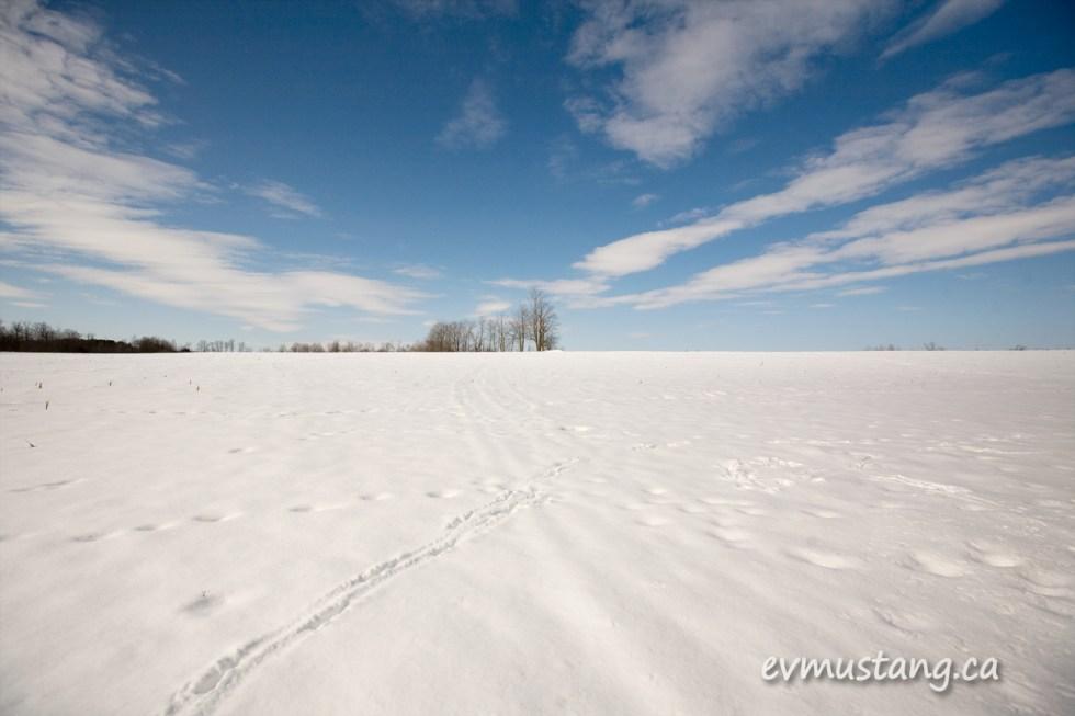 image of deer tracks in the snow