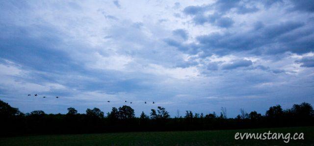 image of geese flying past dark clouds