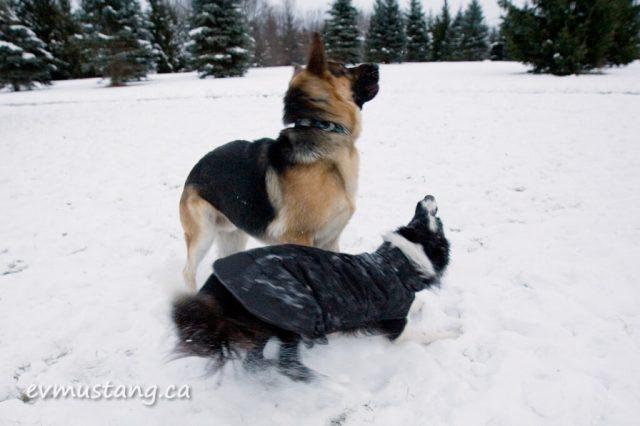snowdogfight03