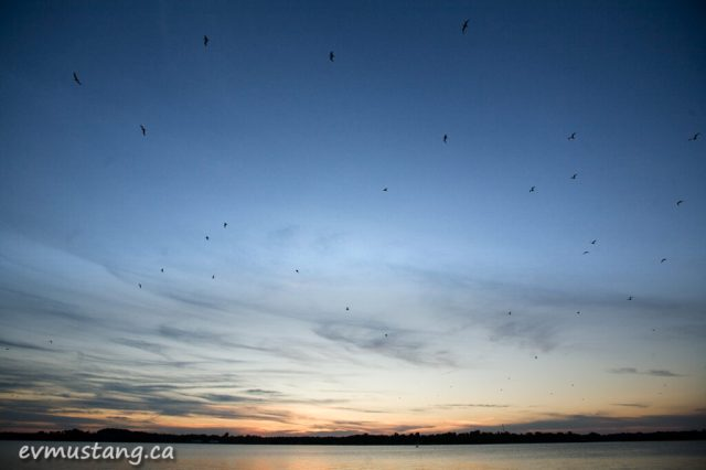 image of flock of gulls flying past sunset over lake