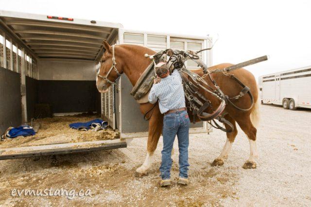 10_heavy_horse