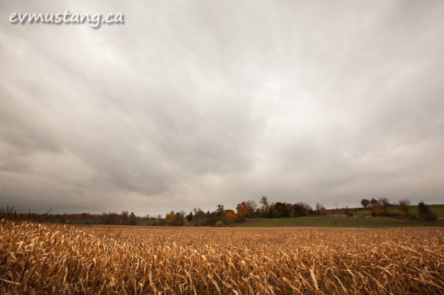 image of corn field in fall