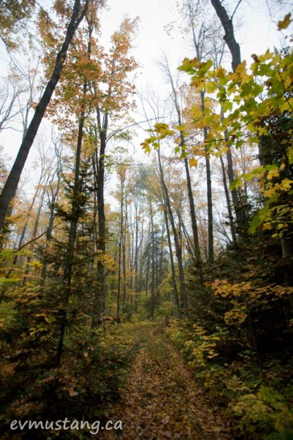 image of forest in autumn