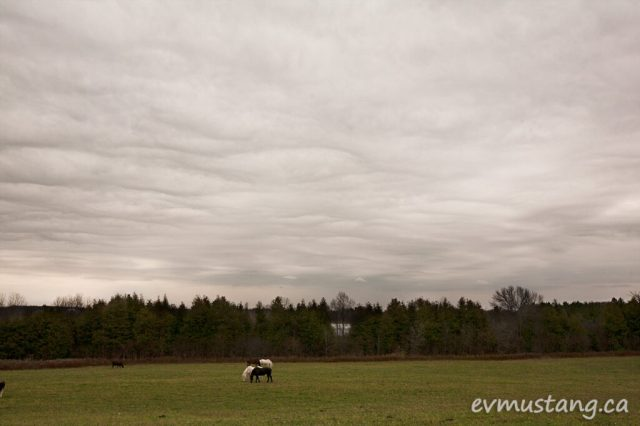 image of horses in field under stormy sky