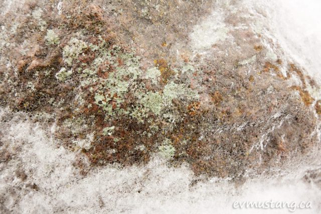 image of granite covered in lichen and ice