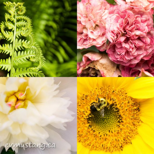four images of garden plants and one bee