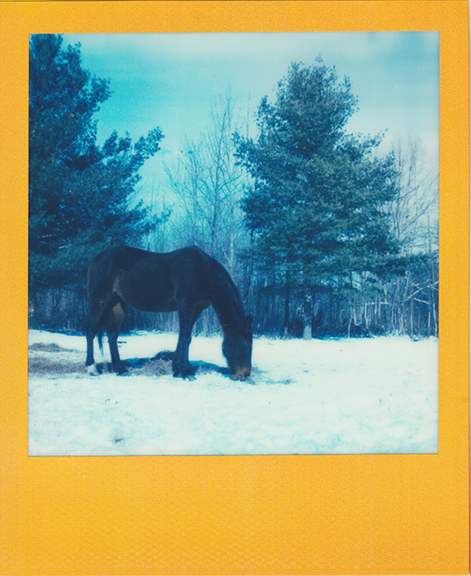 scan of a polaroid photograph of a horse in a snowy field