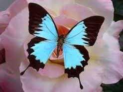Histoire du papillon