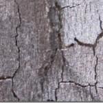 tree-bark-1.jpg