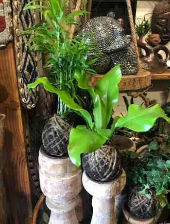 Mud Balls - Plants that don't require a pot