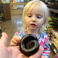 Girl with African Train Millipede