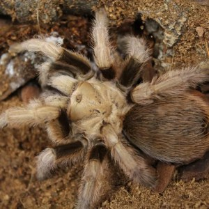 Invertebrates Available In Store | Evolution Reptiles | Oxfordshire