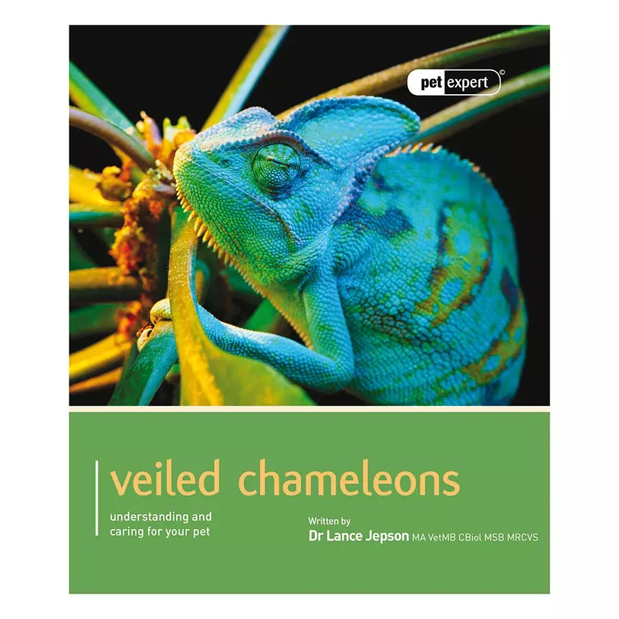 Pet Expert. Veiled Chameleons