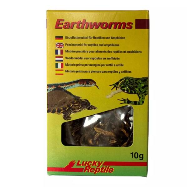 Lucky Reptile Earthworms 10g