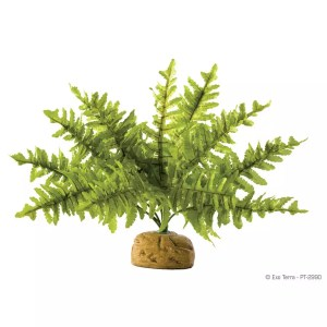 Exo Terra Boston Fern Small