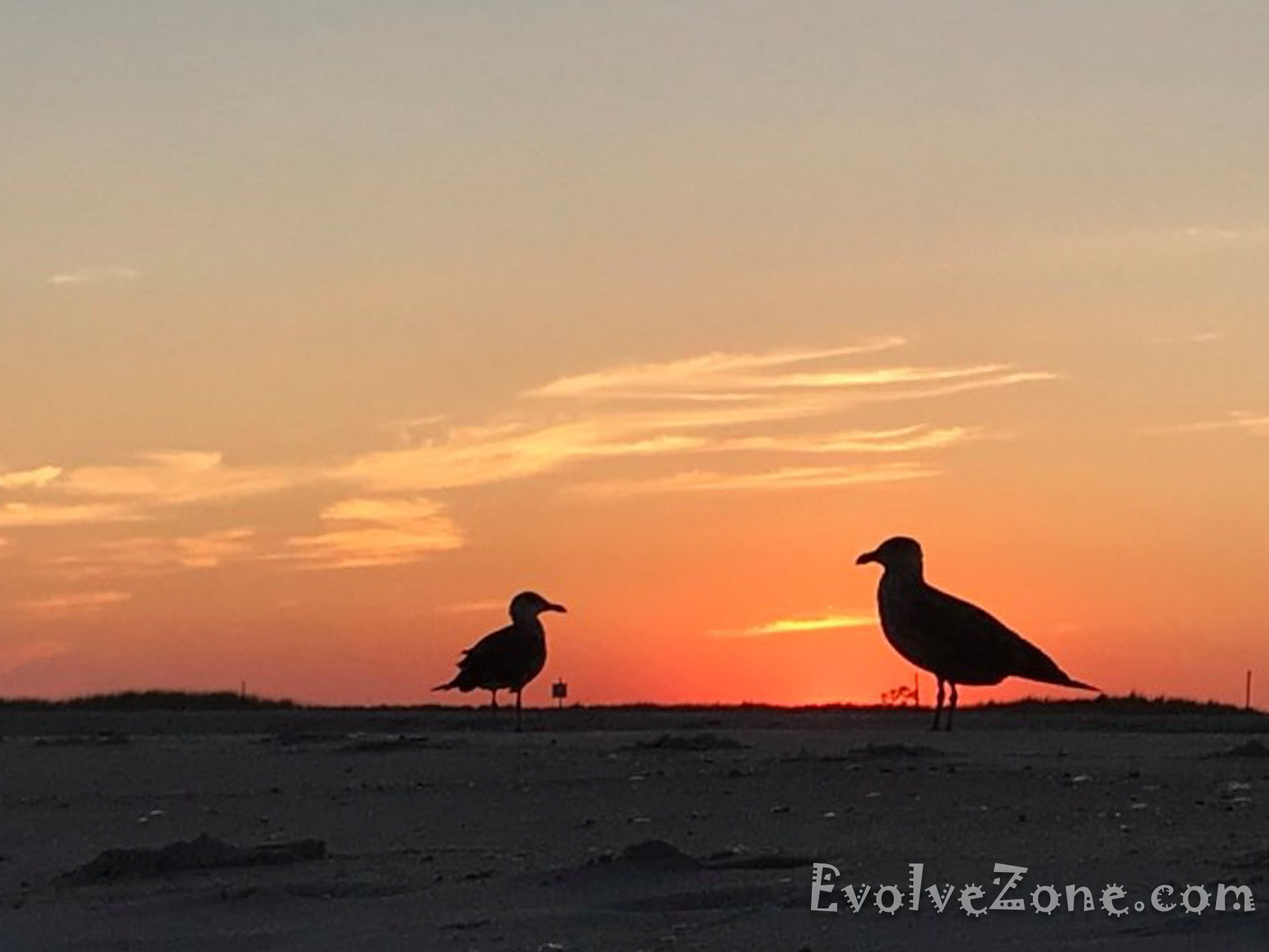 Seagulls at Jones Beach Sunset