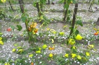 Πέτροβιτς: Άμεση εκτίμηση και καταβολή αποζημιώσεων για τις καταστροφές από χαλάζι