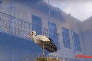 Πολύ όμορφο βίντεο για την άνοιξη που έρχεται στο Σουφλί