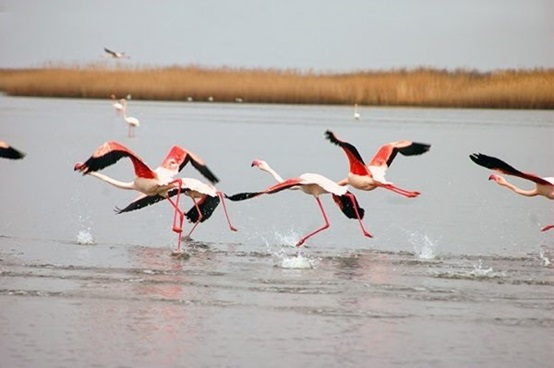 Εικόνα που περιέχει υπαίθριος, νερό, ζώο, πουλί  Περιγραφή που δημιουργήθηκε αυτόματα