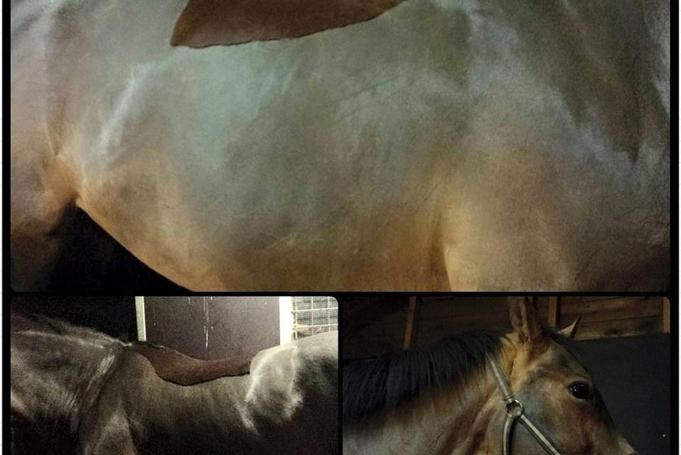 Weer een paar paarden geschoren