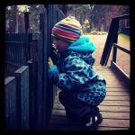 Nyfiken treåring håller koll på getterna