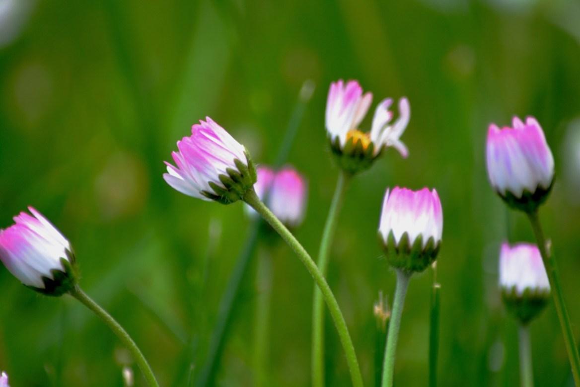 Květina – Creative Commons (Pixabay.com)