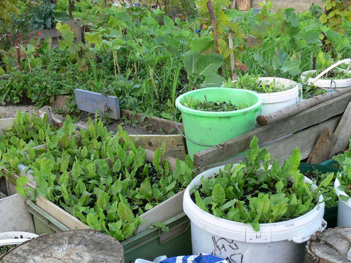 Zelenina – Creative Commons (Wikimedia.org)