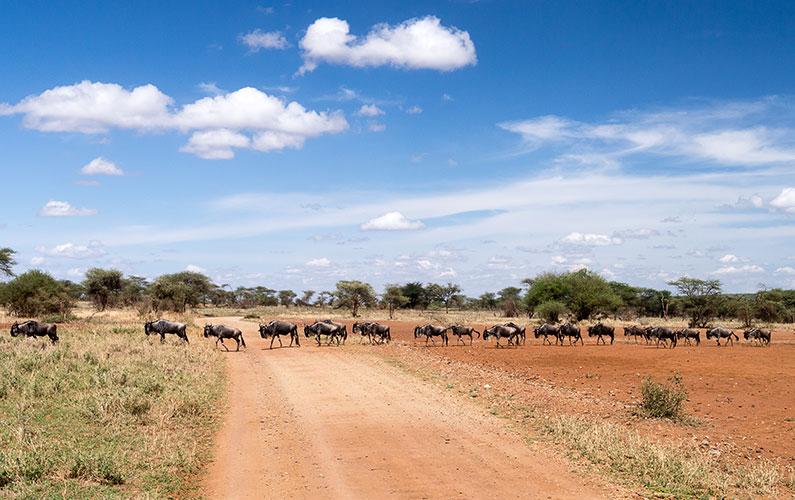 1.-Národní-park-Serengeti-–-zázrak-přírody