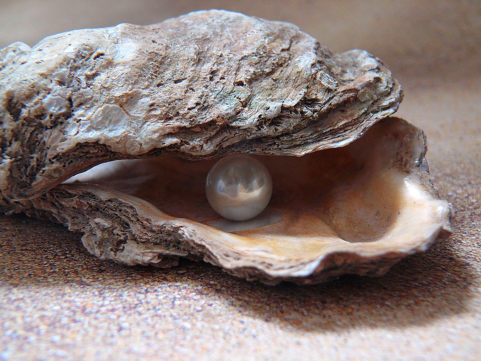 Sea Shell Pearl Shell Light Oyster Nature