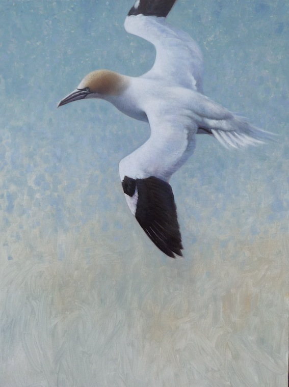 ewoud-de-groot-wildlife-birds21