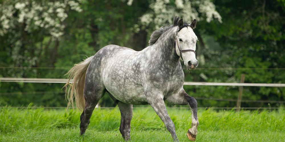 APO 2020 – Webinar für den Pferdeführerschein