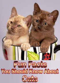 Fun Facts You Should Know About Cats