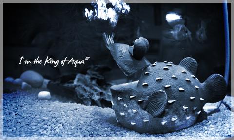 kingofaqua