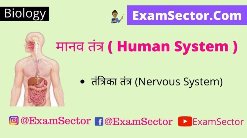 मानव तंत्र ( Human System )   तंत्रिका तंत्र (Nervous System),