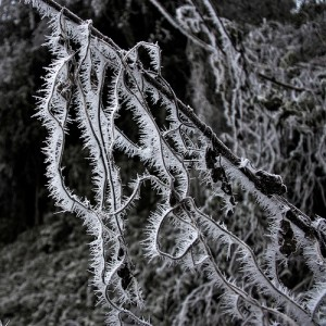 Frost at night has its own particular beauty.
