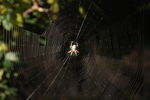 A noiseless patient spider spins its web in the garden.