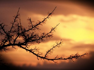 Reza's photograph of an earthly branch in the foreground and the sky in the background reminds us of the tension between earth and heaven.