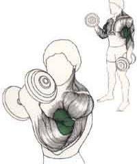 Ejercicio para Biceps Curl