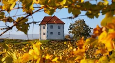 Risultati immagini per zone vinicole croazia