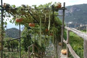 Vegetable garden of the Villa