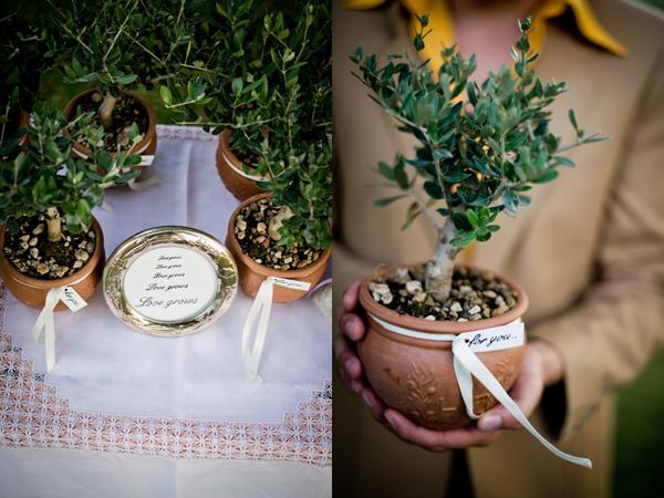 Olive tree wedding favors