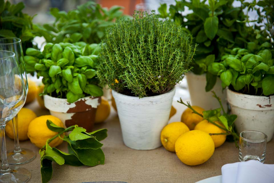 Basil, thyme and lemons for table decoration