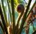 Tree fern growing