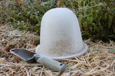 Ochrona roślin przed mrozem