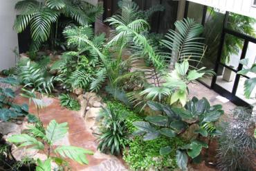 Jakie rośliny egzotyczne pasują do wnętrz