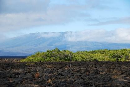 Elizabeth Bay - Isla Isabela 2