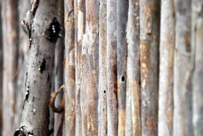 Bambusstrukturen