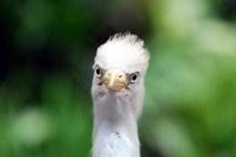 Kuala Lumpur - Angry Bird